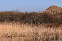 Steeds meer natuur in Nederland