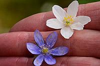 Het razendsnelle Scandinavische voorjaar