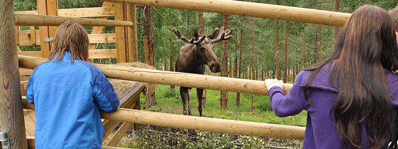 Eland in Bjørneparken
